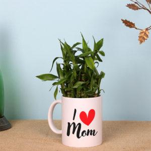layer-lucky-bamboo-in-i-love-mom-mug