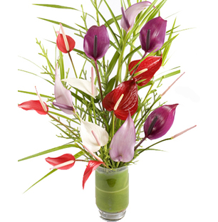 Anthurium in Vase