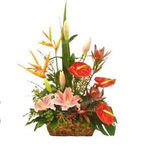 Anthurium, BOP & Lily Basket