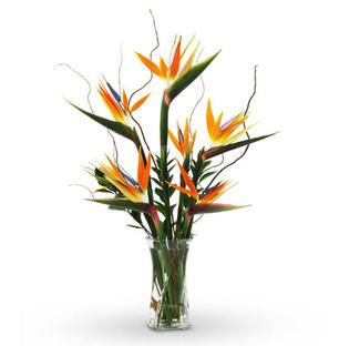 Bird of Paradise Vase