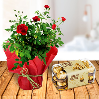 Rose Plant and Ferrero Chocolates