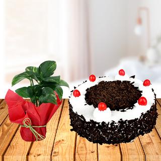 Money Plant and Cake