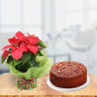 Plum Cake with Poinsettia Plant