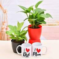 Greet Your Mom Dad with Green Garden and Mugs