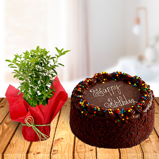 Tulsi Plant and Chocolate Cake