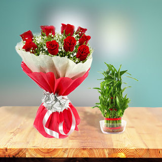 Lucky Bamboo Plant + Roses Combo