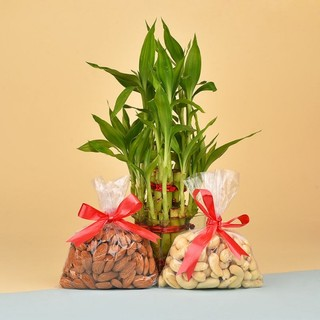 Dry Fruits N Lucky Bamboo Combo