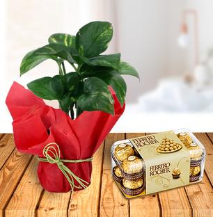 Money Plant and Ferrero Chocolates