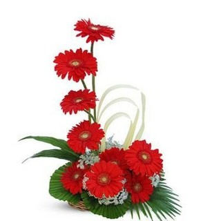 Gerbera Arrangement  12 Flowers