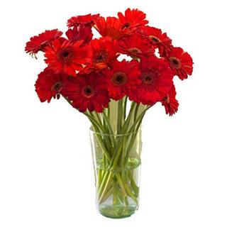 Valentine Red Gerbera Vase