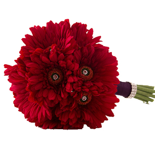 Valentine Red Gerberas