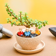 Celebrate Auspicious Occasions with Jade plant and Cute Monks