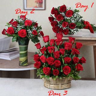 3 Days of Ravishing Roses