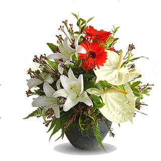 Anthurium, Gerbera & Lily
