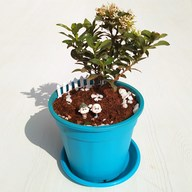 Show gratitude to grandparents - Miniature Garden