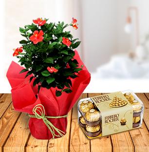 Hibiscus Plant and Ferrero Chocolates