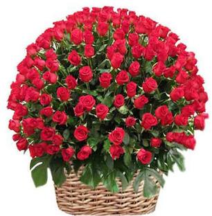 Roses Basket - Extra Large