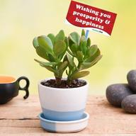 Happiness with Jade Plant in Ceramic Pot