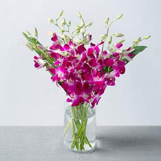Purple Orchids Vase