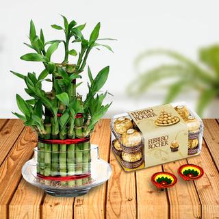 Lucky Bamboo Combo
