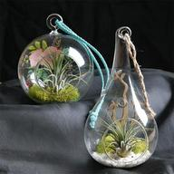 Combo of 2 Air Plants with Mesmerizing Elements