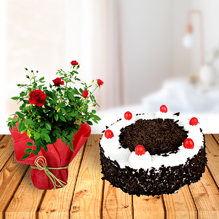 Rose Plant and Black Forest Cake