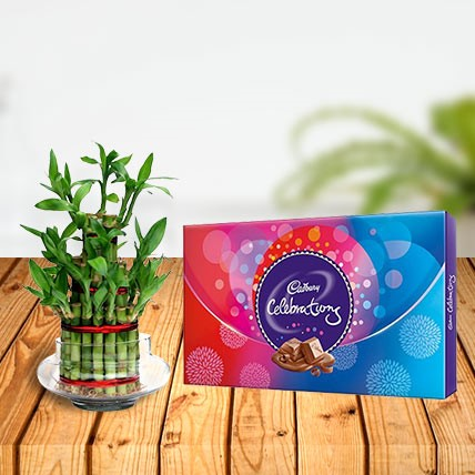 Lucky Bamboo with Cadbury Celebration