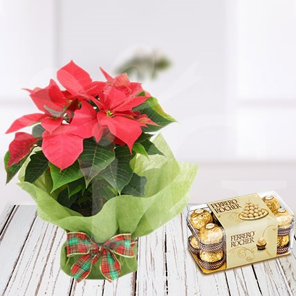 Poinsettia Plant with Forrero Rocher Chocolate