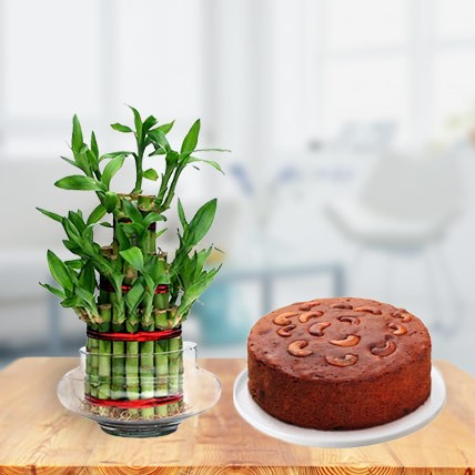 Plum Cake with Bamboo Plant Triple Layer