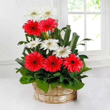 Pink & White Gerbera Basket Arrangement
