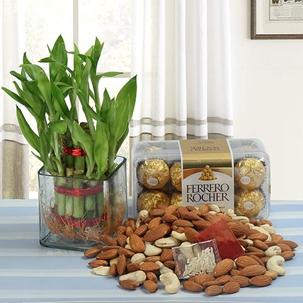 Dry Fruits and Lucky Bamboo With Chocolate