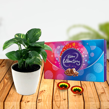 Money Plant and Celebration Chocolates with Diya