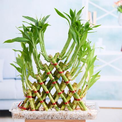 5 Layer Pyramid Lucky Bamboo