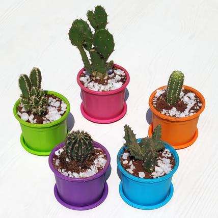 Desert Warrior Cacti