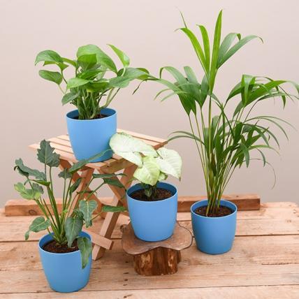 Best 4 April Cool Plants Pack