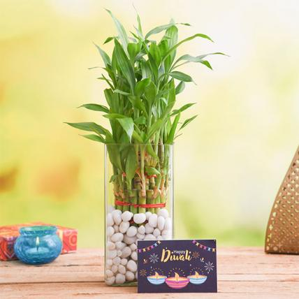 Celebrate Diwali with 3 Layer Lucky Bamboo Plant