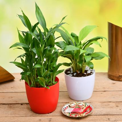 Rakshabandhan Special Plants for Good Luck and Happiness