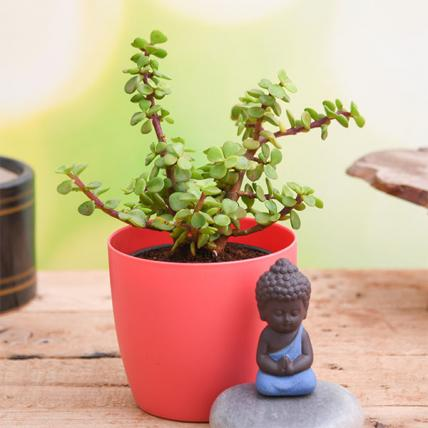 Jade Plant with Meditating Buddha to Wish Good Fortune