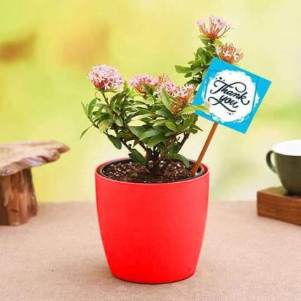 Say Thank You with Pink Ixora