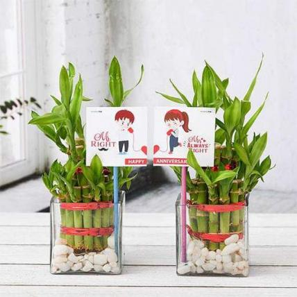 Celebrate Anniversary with 2 Layer Lucky Bamboo Plants