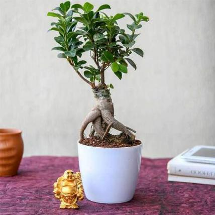Wish Good Luck with Ficus Bonsai and Laughing Buddha