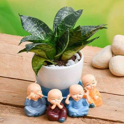 Wish Happiness with Super Sansevieria in a Ceramic pot and Cute monks