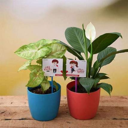 Happy Anniversary with Air Purifier Plants
