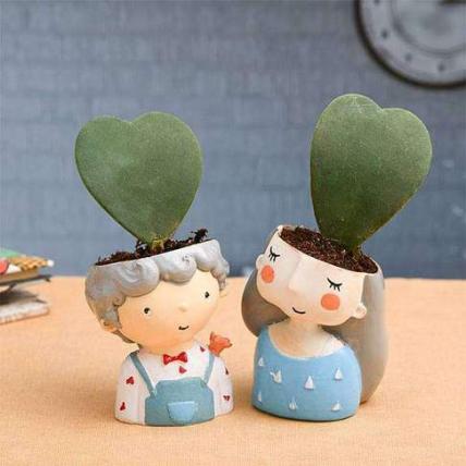 Cute Couple with Heart Shape Hoya Plant