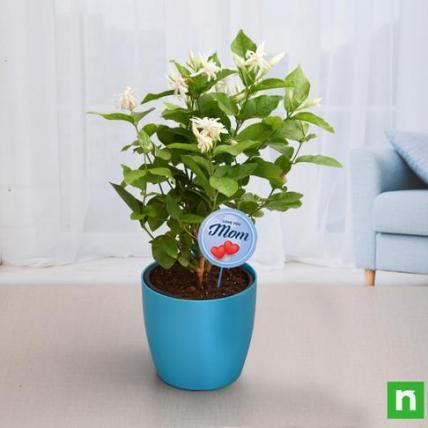 Fragrant Mogra Plant for Compassionate Mom